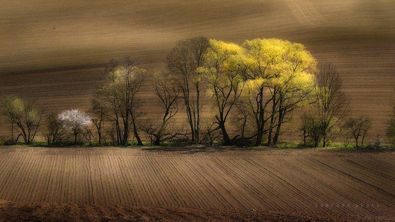 весна в полях,весна ,nikon d750,zanfoar,czech republic,czechia,чехия,nature,landscape,moravia,toscana весна в поляхphoto preview