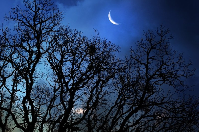 Ночь, луна...photo preview