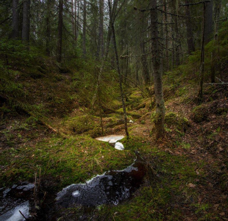 архангельская обасть, весна, русский север, вельский район, ручей, лес Ручейphoto preview