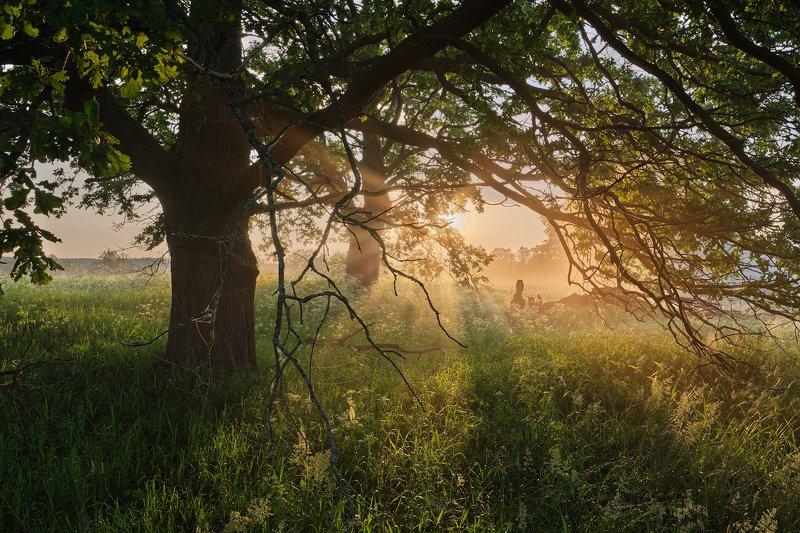 утро, рассвет, солнце, дерево, туман Встречая рассветphoto preview