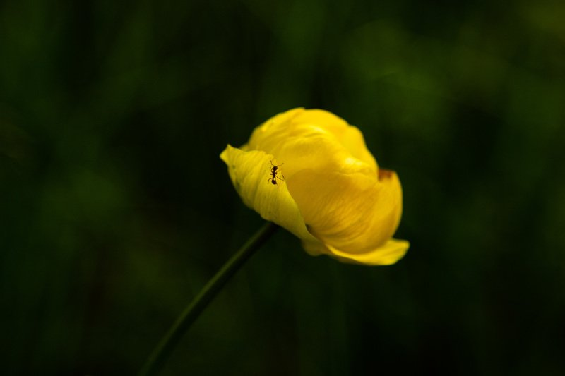 Лесной цветокphoto preview