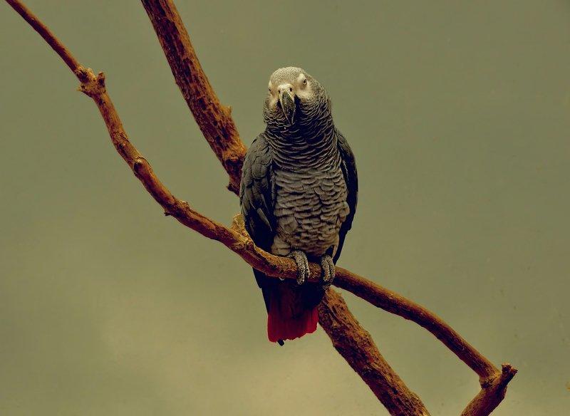 abudhabi.parrot.rendezvous Свиданиеphoto preview