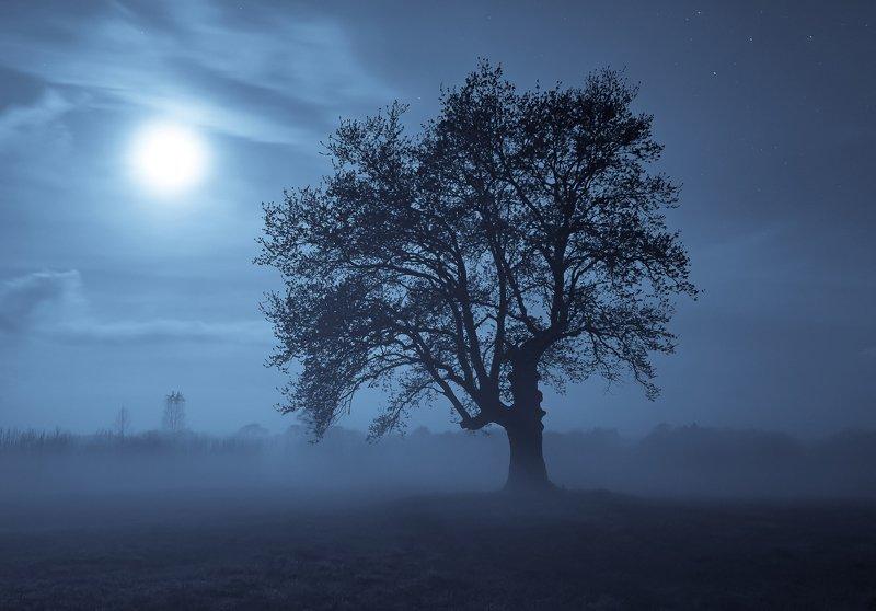 ночь, луна, туман ***photo preview
