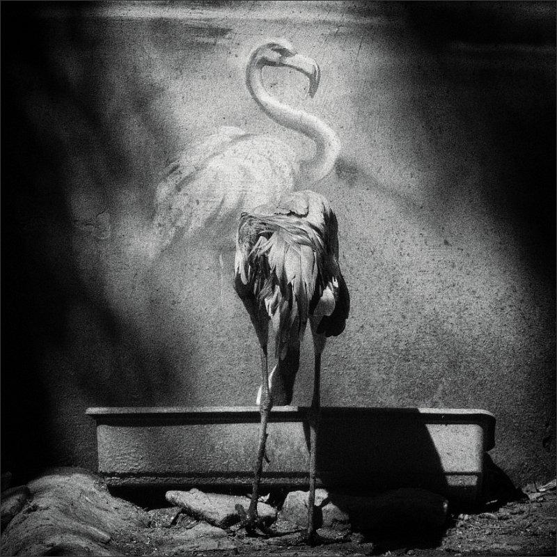 Журавль и Фламингоphoto preview