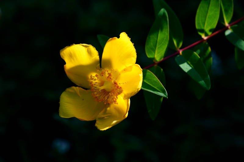 south korea, seoul, spring, bokeh, backlight, macro, yellow, beautiful, close-up, flower, contrast Beautiful yellowphoto preview