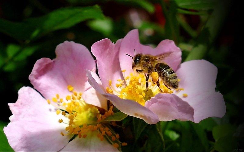 Пчелкаphoto preview
