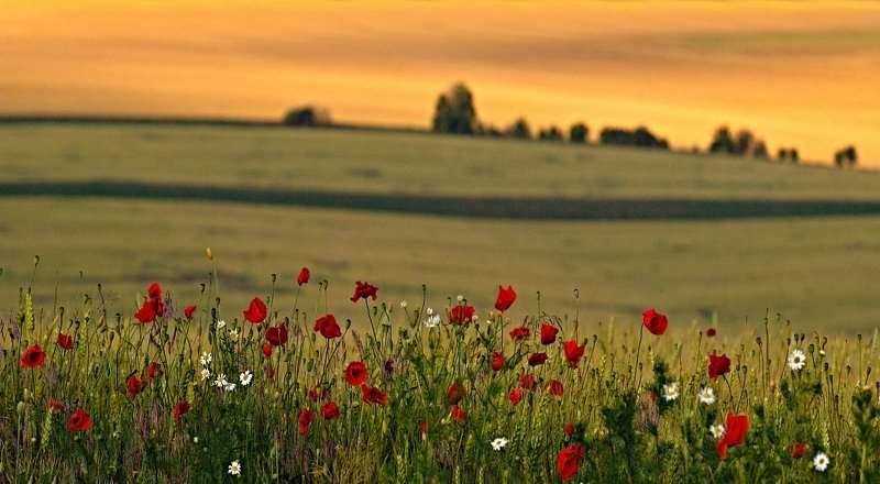 moravian tuscany Meadow flowersphoto preview