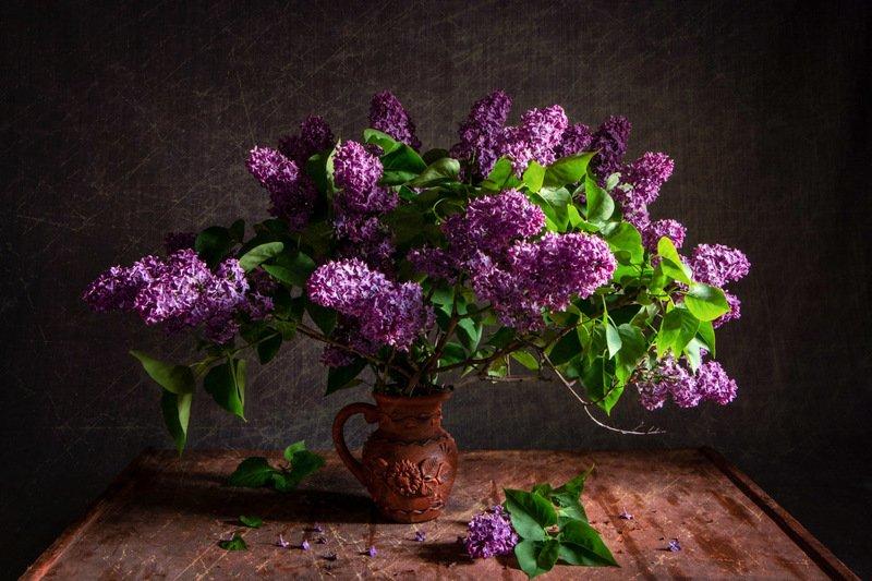 сирень, натюрморт, весна, майский букет, аромат, май Пора сирениphoto preview