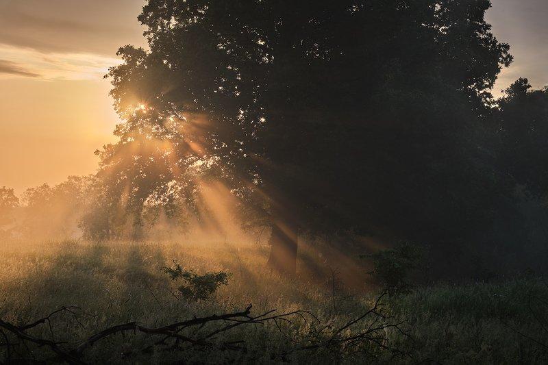 солнце, лучи, рассвет, туман Свет и тьмаphoto preview