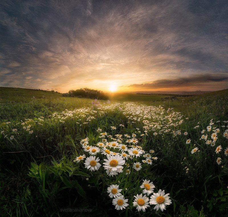 ромашки, закат, кмв, кавказ, ессентуки Ромашковое летоphoto preview