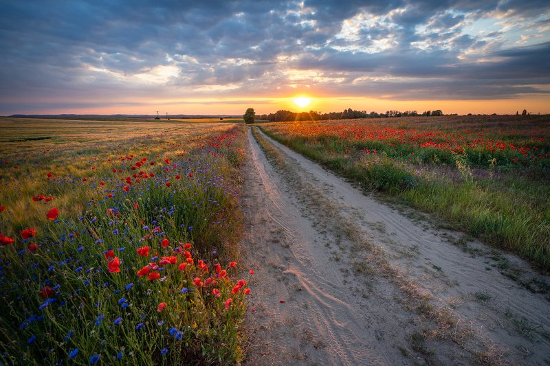 road of hope path magic sun sunset poppy flowers dranikowski sunlight sky clouds Road of Hopephoto preview