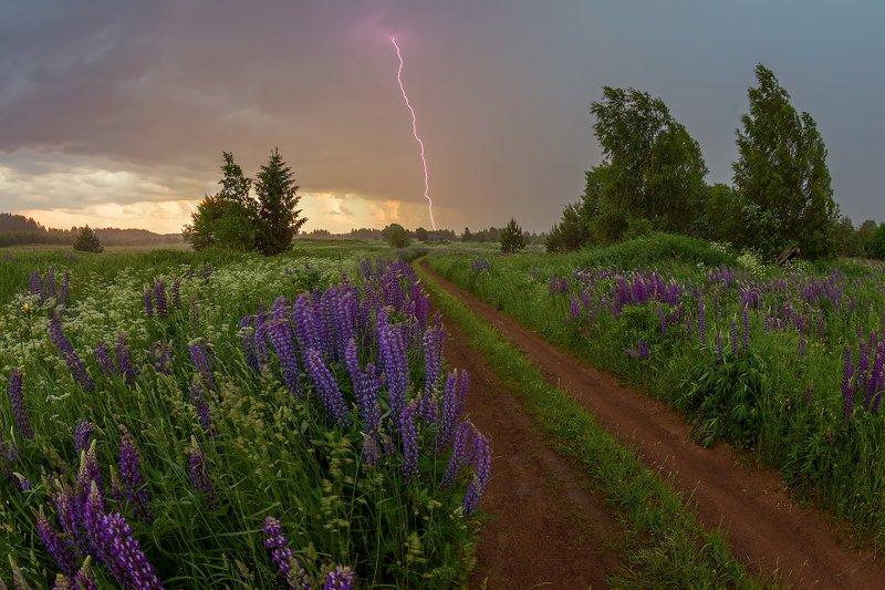 гроза, люпины, деревня, дорога, дождь, лето, цветы Гроза ..)photo preview