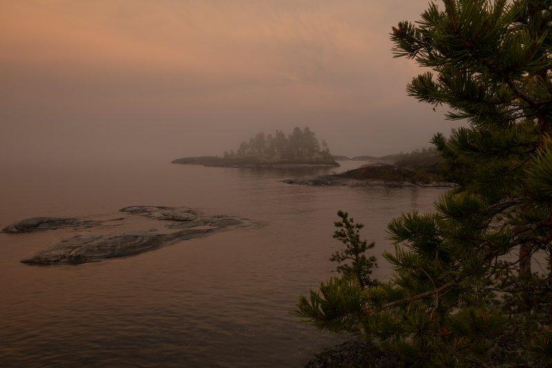 паучок в розовом тумане)photo preview