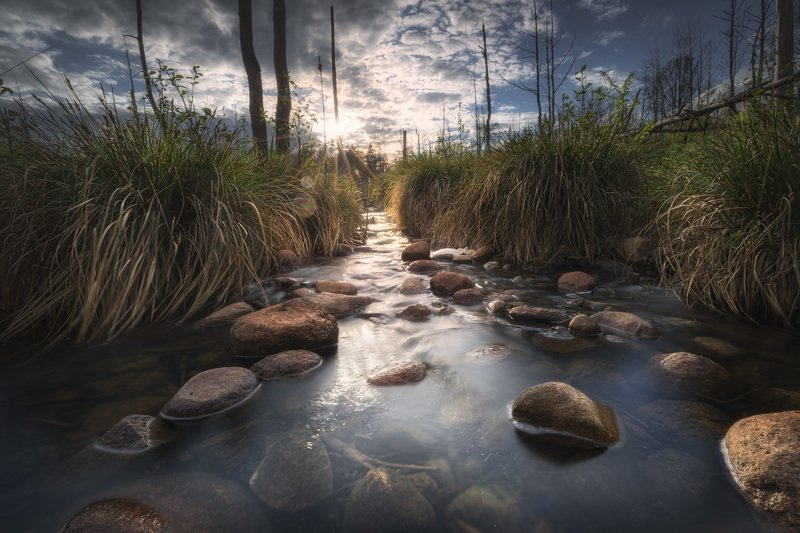 creek water river stones trees swamp grass Podlasie Poland Asylum...photo preview