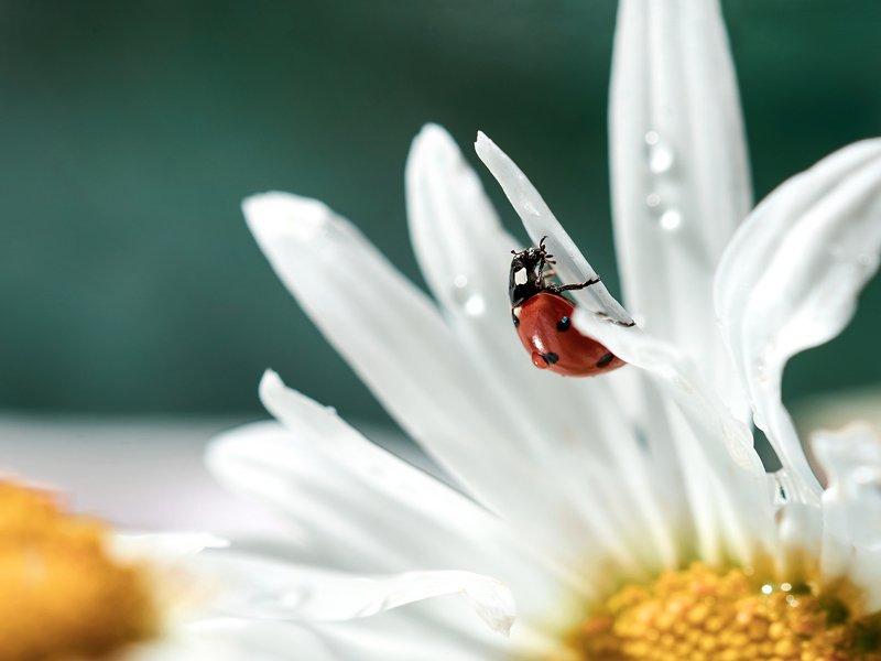 macro, nikon, nature,sigma, цветы, макро, боке Путешествиеphoto preview