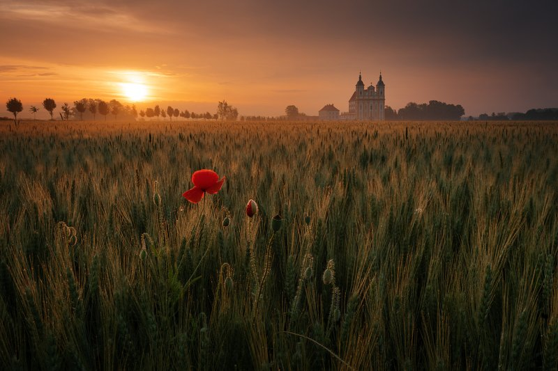 sunrise, landscapes, field, sky Sunrisephoto preview