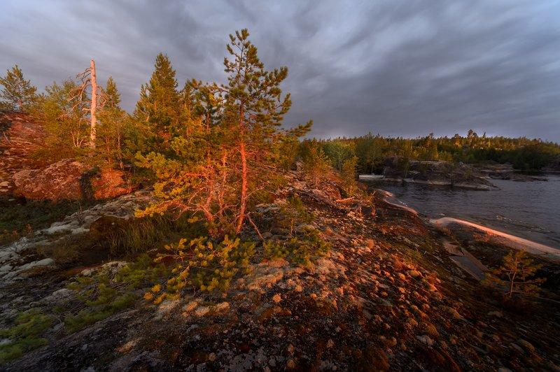 карелия,утро,рассвет,красота,ладожское озеро,сосны,никон 14mm f 2.8 \