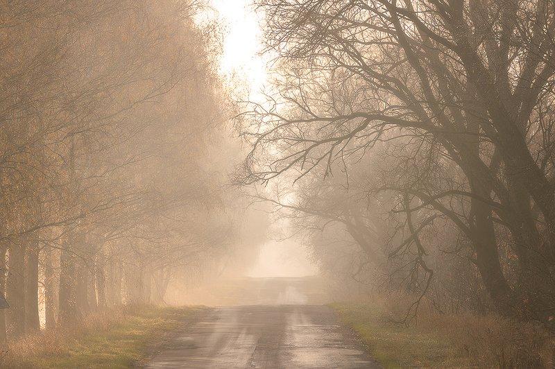 пейзаж,осень,туман,рассвет,россия,брянская область,красота,утро \