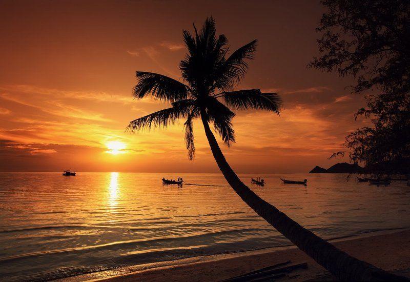 club 26, family garden, island, juliart5, koh tao, palma, summer, sunset, thailand, vint26, Zaporozhenko vitaly & julia Club 26, Sunshine Reggaephoto preview