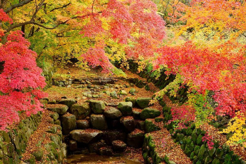south korea, gyeongsangbukdo,morning, landscape, autumn, temple, leaves, branch, colorful, beauty, Autumn colorsphoto preview