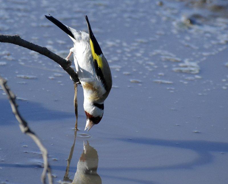 Птицы Ульяновской областиphoto preview