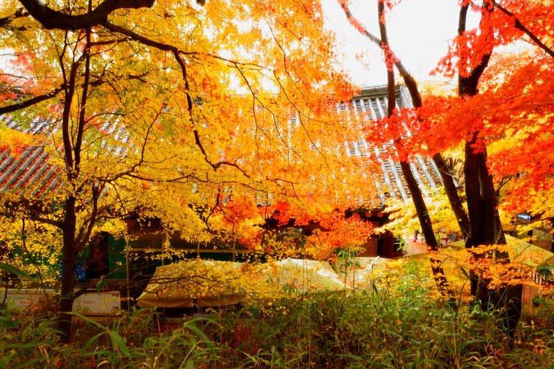 south korea, gyeongsangbukdo,temple,backlight, landscape, autumn, maple, colorful, bokeh, beauty, beautiful, In the templephoto preview