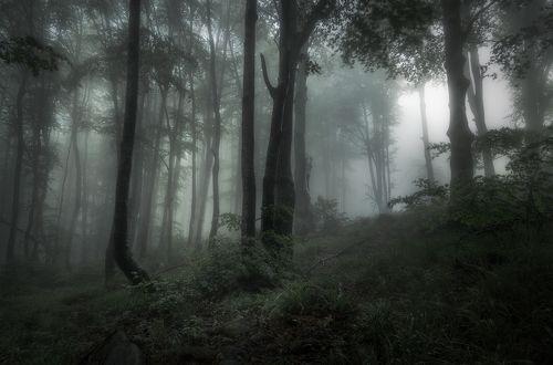 June, the charm of the mist / Очарование тумана