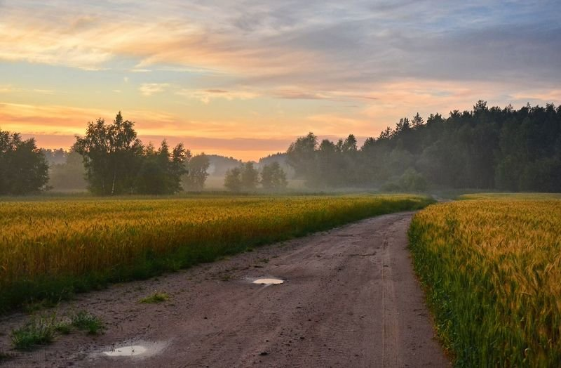 туман, поле, закат, sunset, лето, летний пейзаж Туманный вечер в полеphoto preview