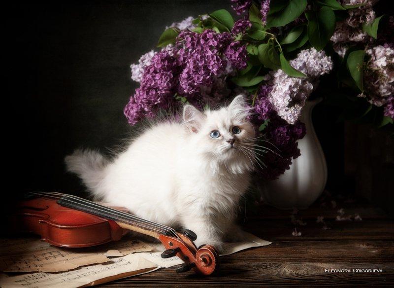 НатюрКотики. Невские маскарадные котятаphoto preview