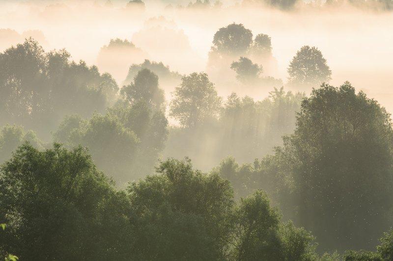 пейзаж,лето,туман,рассвет,россия,брянская область,красота,утро \