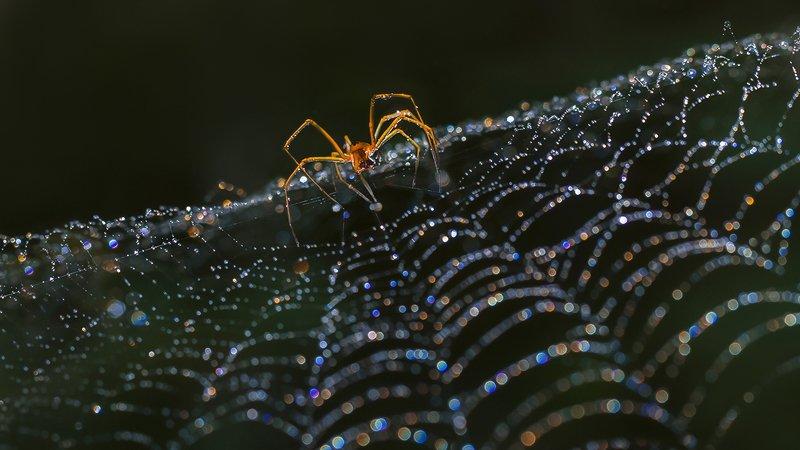 паук, паутина, капли, радуга Алмазные россыпиphoto preview