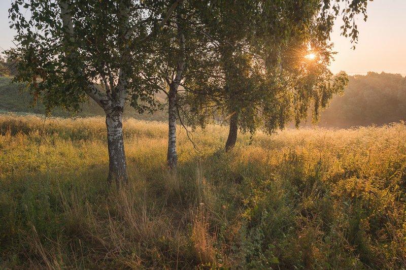 пейзаж,природа,утро,рассвет,березы,красота,туман \