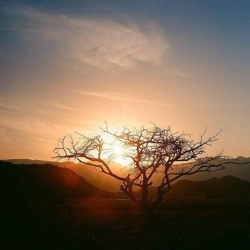 закат, пустыня, израиль, солнце, дерево Sunset in the Desertphoto preview