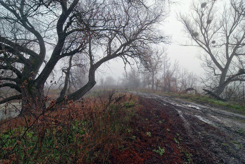осень, туман, дорога, деревья дороги пейзажиста - 2photo preview