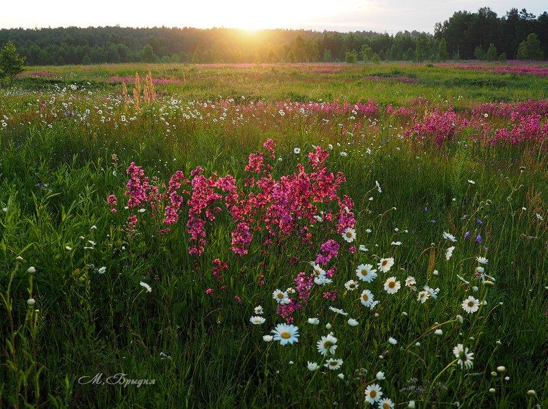 Цветут лугаphoto preview