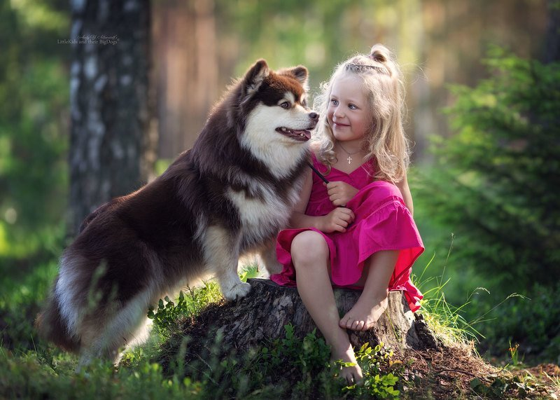 Marianna and Tarja (Finnish Lapphund)photo preview