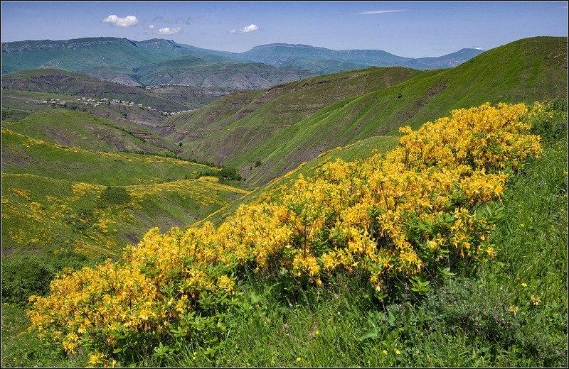 кавказ, дагестан, весна *  *  *photo preview