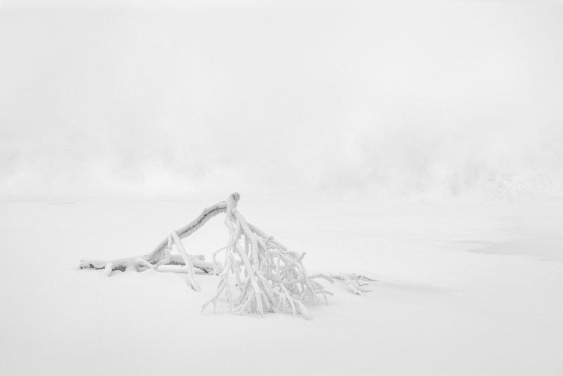 ветка, минимализм, пейзаж, природа, чб, черно-белое, белый, светлый, зима, мороз, холод, лед, река, туман, иней, снег, город, красноярск, остров, отдыха, енисей, сибирь Белая стынь январяphoto preview