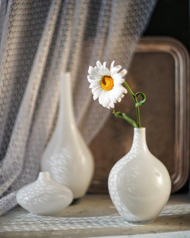 натюрморт ромашка цветок белый гелиос stilllife helios flowers Из жизни ромашкиphoto preview