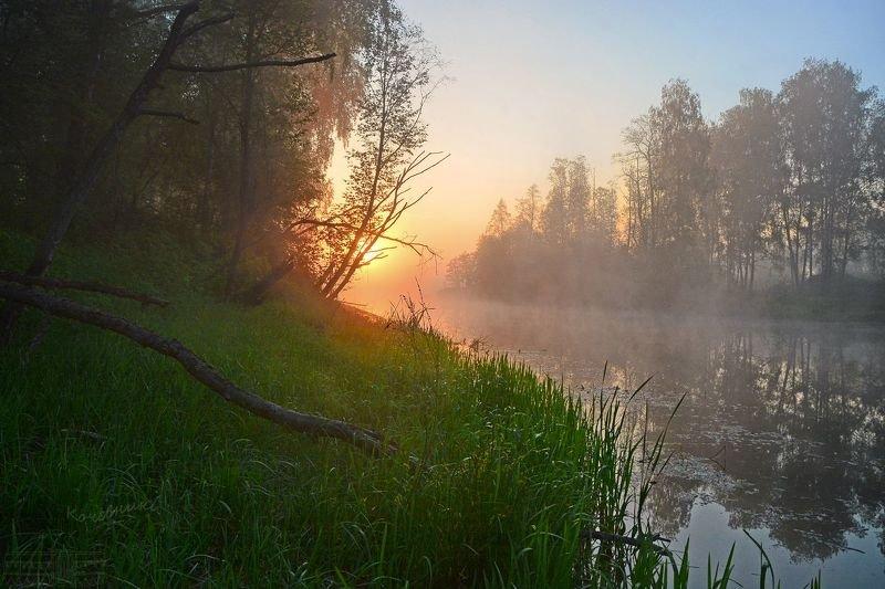 пейзаж, туман, рассвет, деревня, пруд, озеро Летний рассветphoto preview
