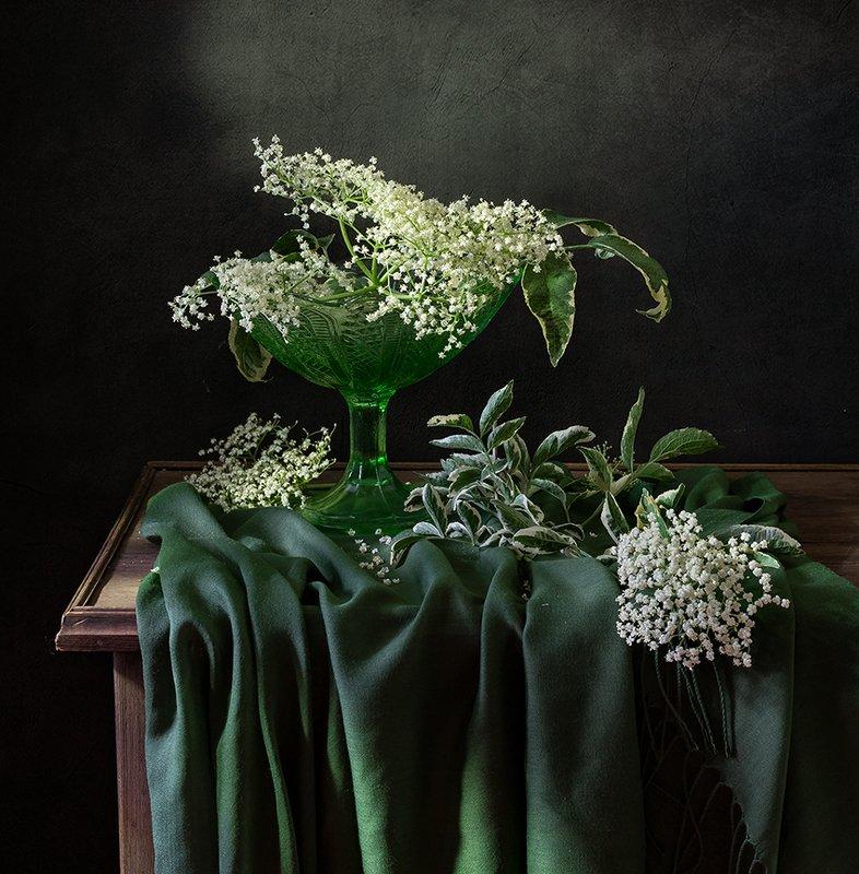 натюрморт, цветы Бузинаphoto preview