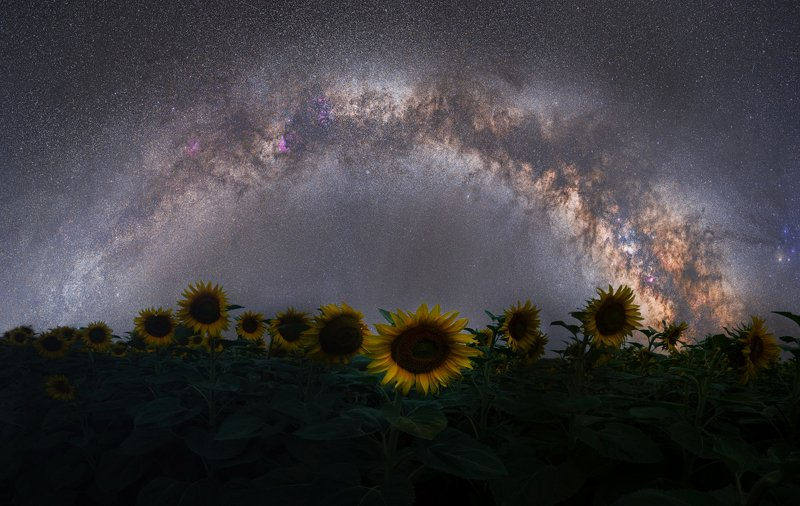 Milky way and sunflower...photo preview