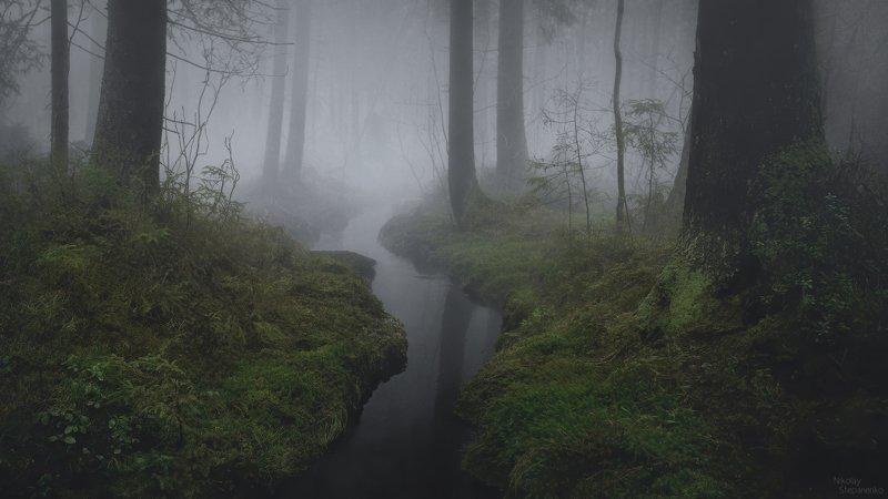лес, туман, ручей, комарово, ленинградская область Туманный ручейphoto preview