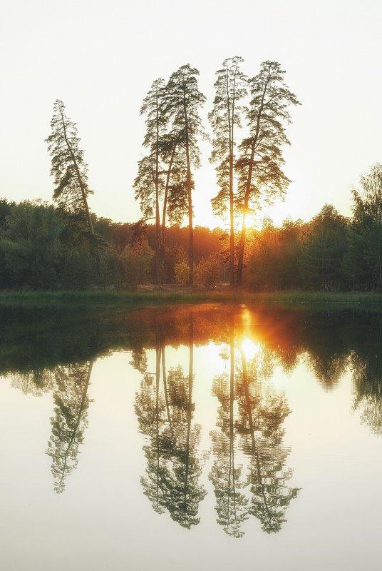 закат, сосны, лесное озеро, лебяжье озеро Закат на Лебяжьемphoto preview
