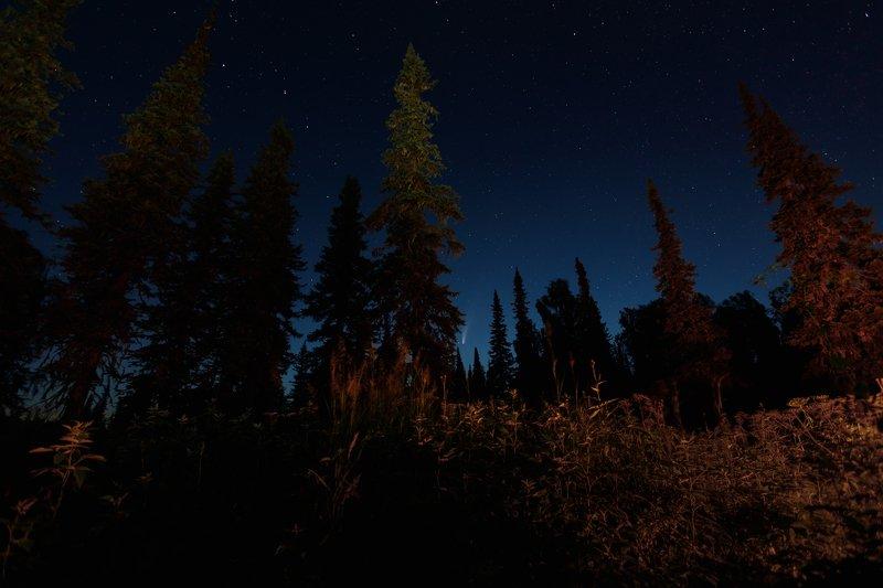 комета, пейзаж, ночь, звезды, тайга, лес, природа, звездное небо Падающая звезда в мистической тайгеphoto preview