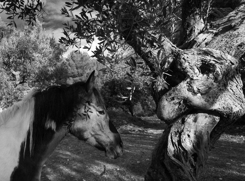 печальная лошадь, дендротерапия,  лошадь дендротерапияphoto preview