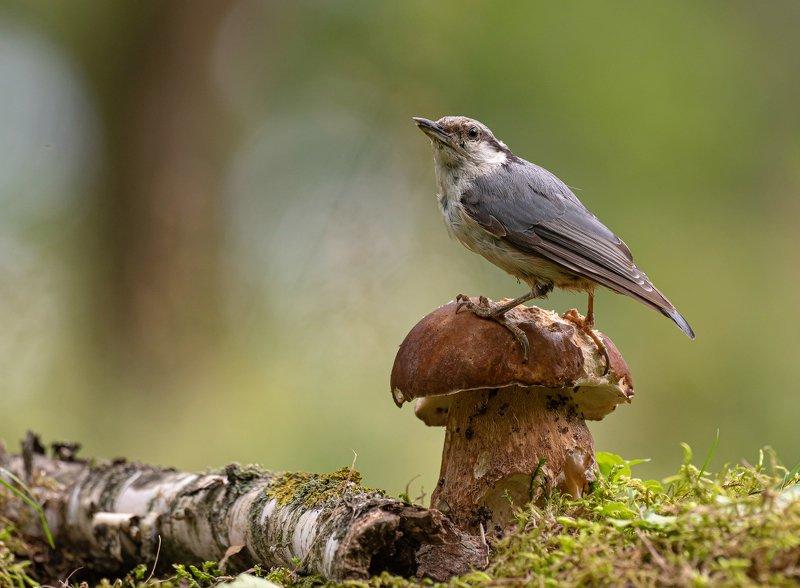 птицы,природа, лето Картинка из лесаphoto preview