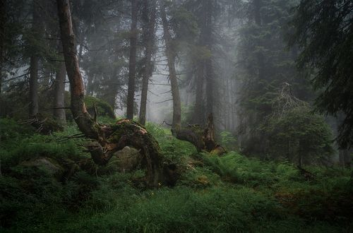In the misty forest