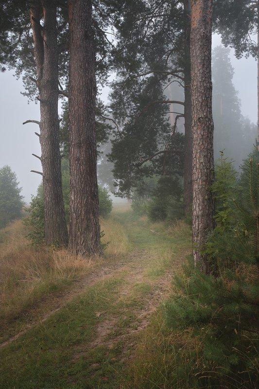 лес, деревья, туман, утро Лесная дорогаphoto preview