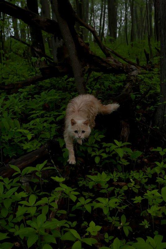 Хранитель туманного лесаphoto preview